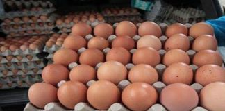 huevos-venezuela